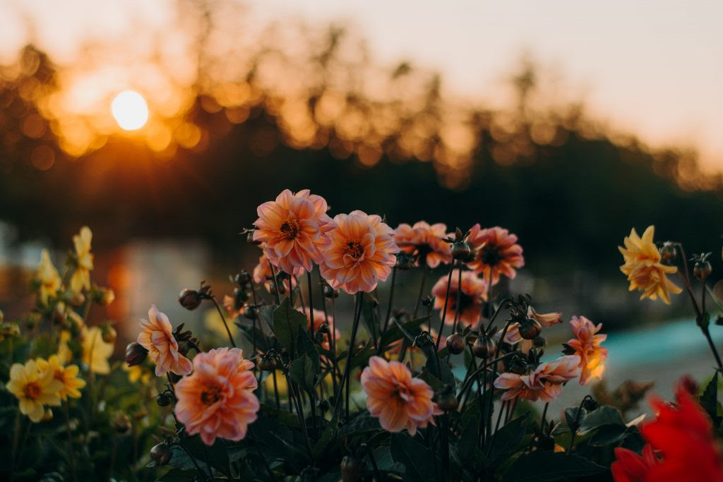 5 Importance of flowers in Human Life