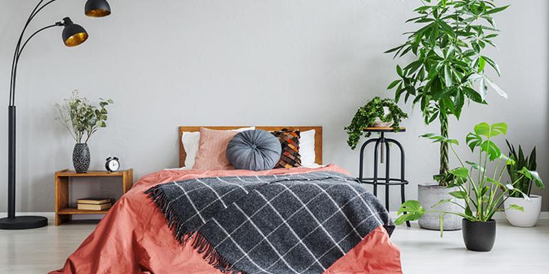 Best Vastu Plants for Bedroom