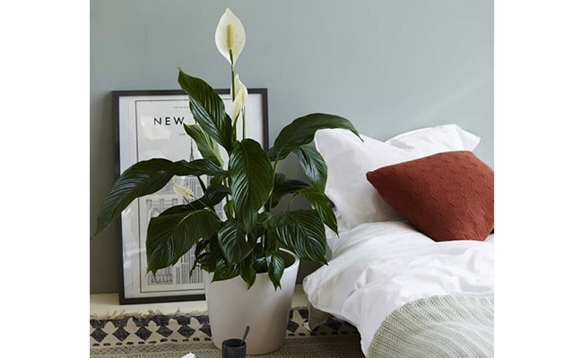 10 Plants You Should Keep In Bedroom And Why