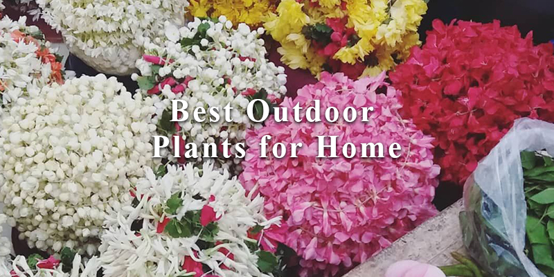 Tour in Search of Best Outdoor Plants for Home