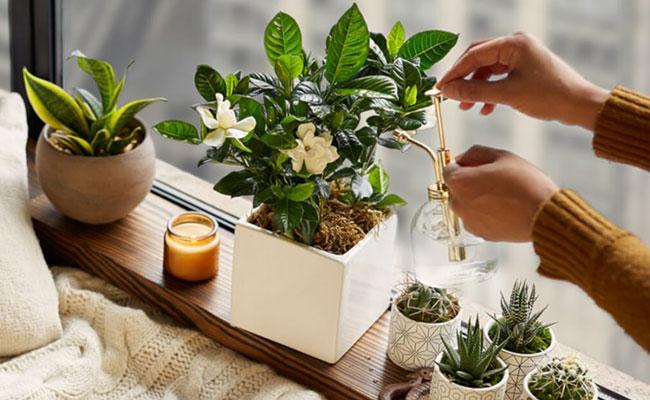 Plant as Bhai Dooj Gift
