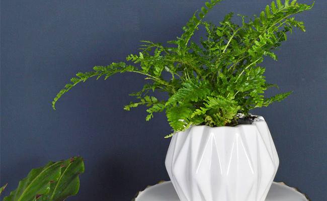 Personalised Room Plant