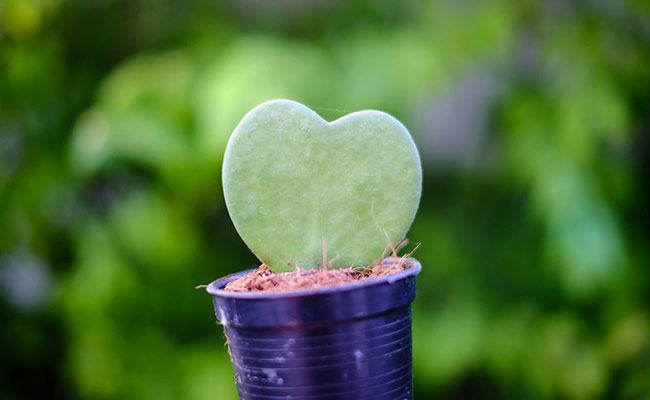 Best Indoor Cactus Plants