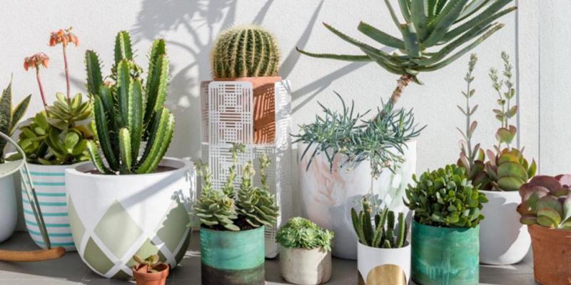 Best Home Decor Succulents Plants