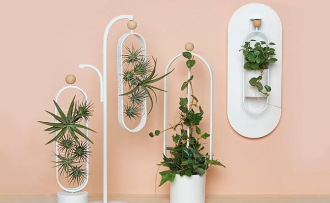 Planters for their offices