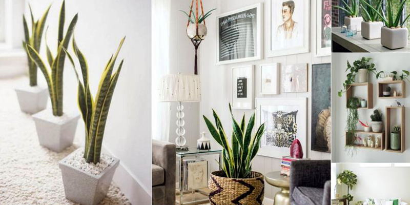 Best Evergreen Plants to Decorate your Living Space