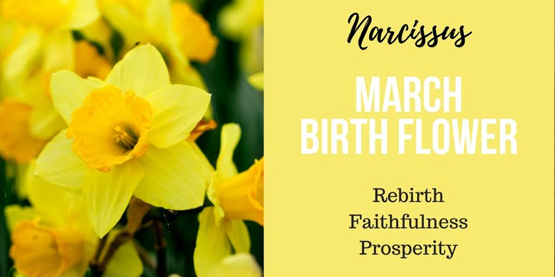 All About March-born Birth Flower