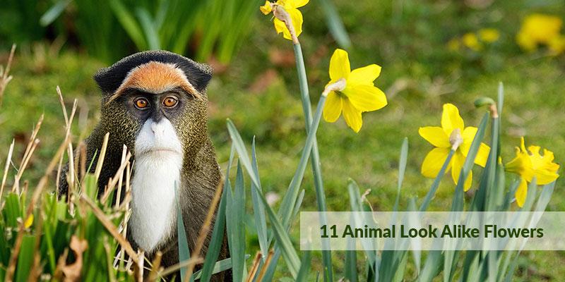 Animal Look Alike Flowers