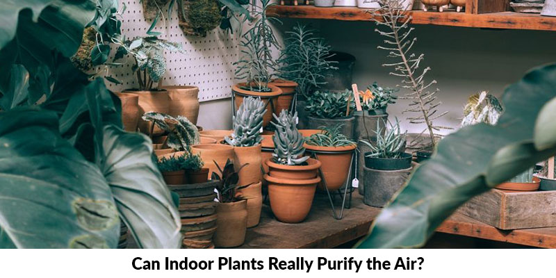 Indoor Plants Purify Air