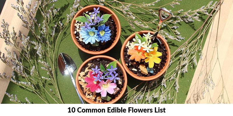 Common Edible Flowers List