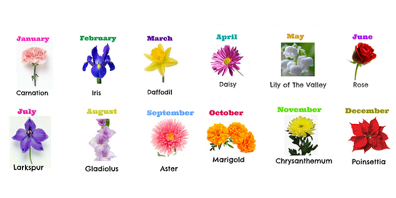 Discover Birth Month Flower