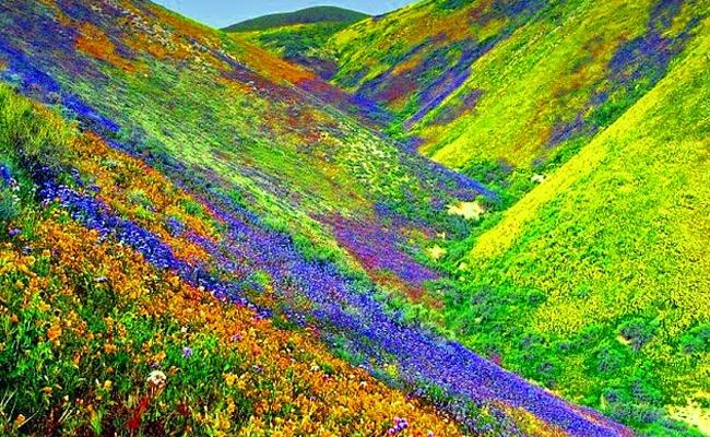 Flora Found in Nanda Devi