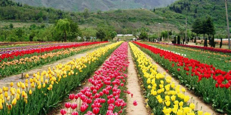 Top 5 Flower Gardens in India