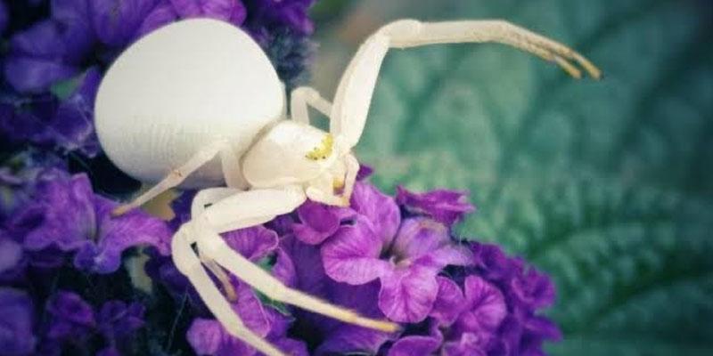 Flower Superstitions