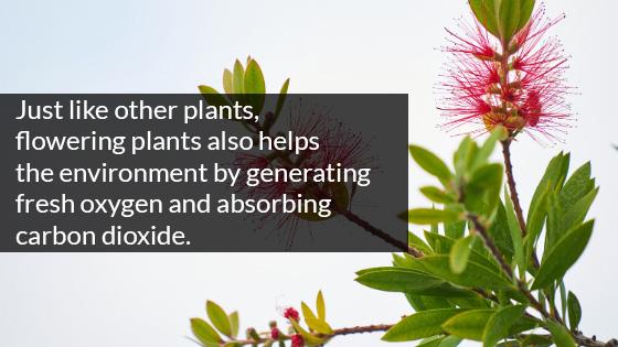 Flowering plants Generate Fresh Oxygen