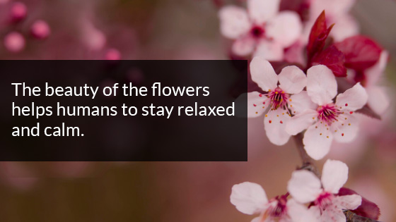 Beauty of the Flowers Helps Humans to Stay Relaxed and Calm