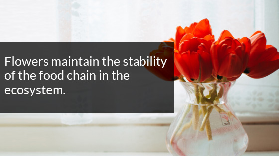 Flowers Maintain the Stability of the Food Chain in the Ecosystem