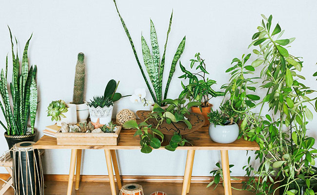 How Plants Purify Air
