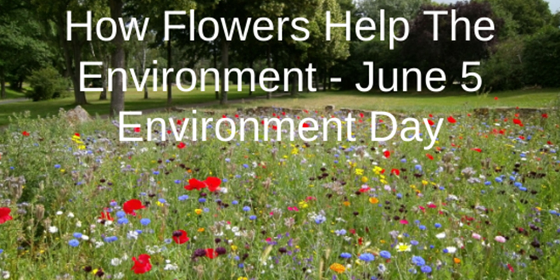 How Flowers Help The Environment