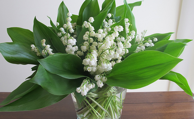 How to Care for your Lily of the Valley Bouquet