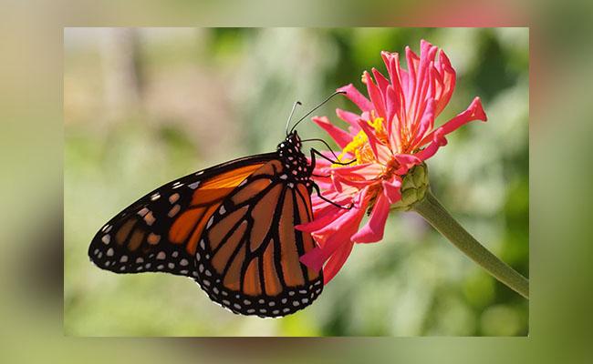Flower, Bees and Butterflies