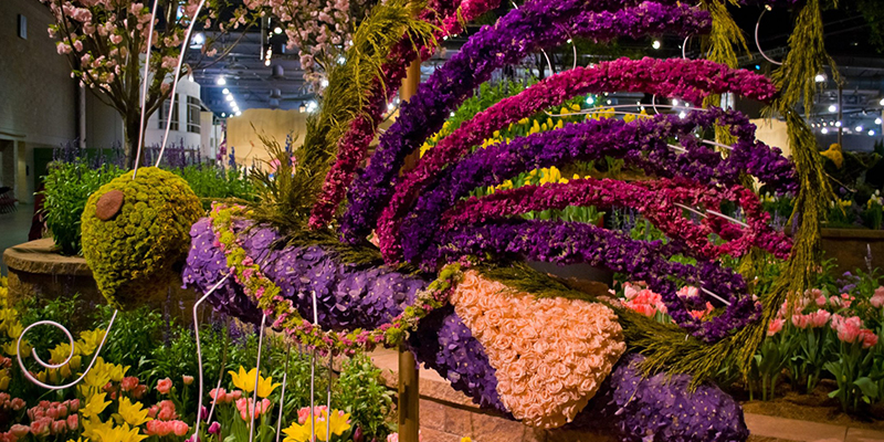 Must Visit Flower Shows in India