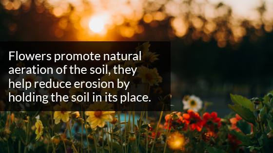 Flowers Promote Natural Aeration of the Soil