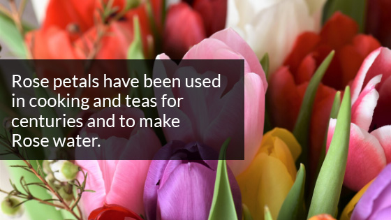 Rose Petals have been Used in Cooking and Teas