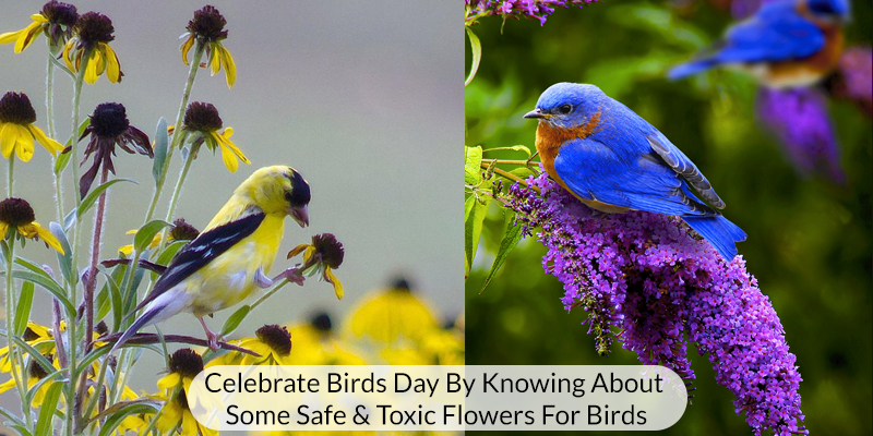 Safe and Toxic Flowers for Birds