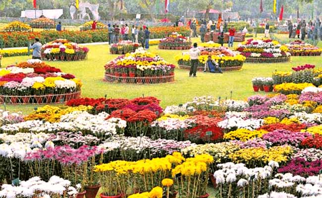 The Chrysanthemums Show, Chandigarh