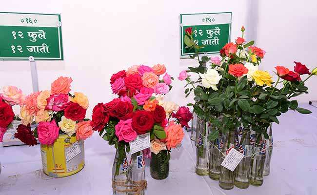 The Rose Flower Show, Pune