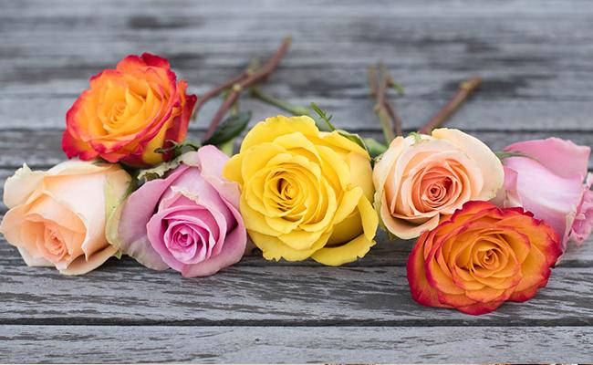 June Birth Flowers - Rose and Honeysuckle