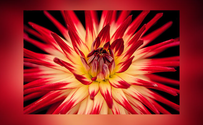 Light Upon the Flower