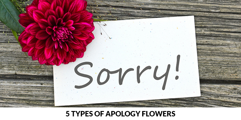 Types of Apology Flowers