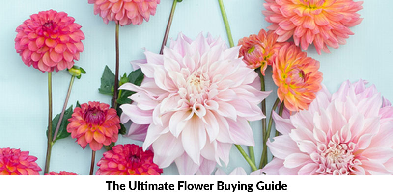 The Ultimate Flower Buying Guide