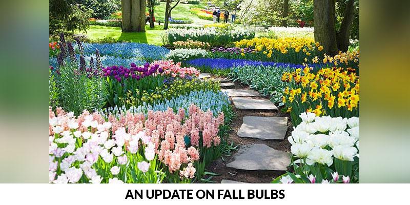Update on Fall Bulbs