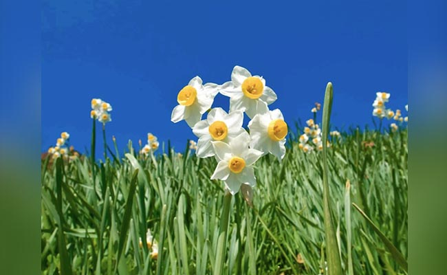 Why Love Narcissus