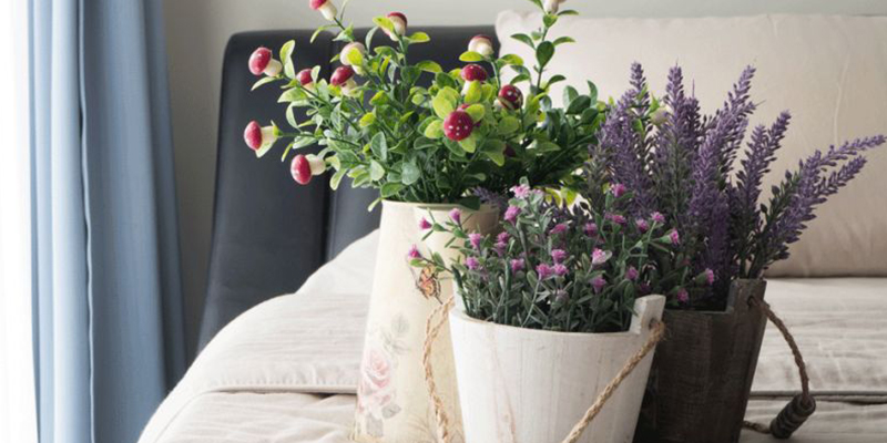 Home Decor Flowering Plants
