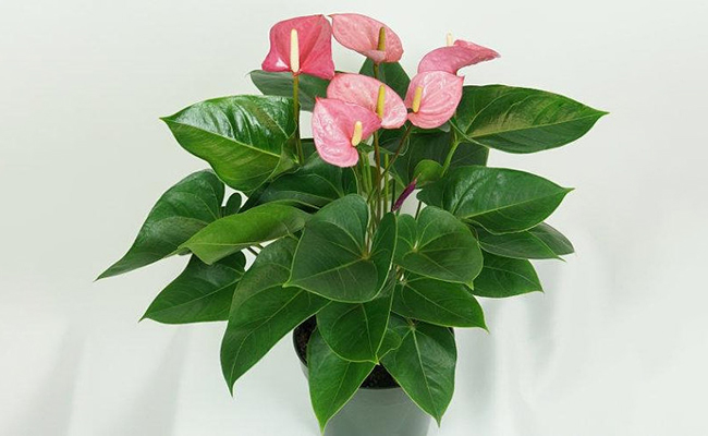 Home Decor Flamingo Plant