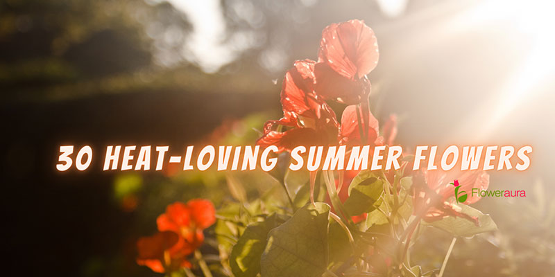 Heat-loving Summer Flowers To Delight Your Eyes