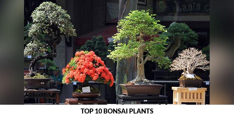Top 10 bonsai plants