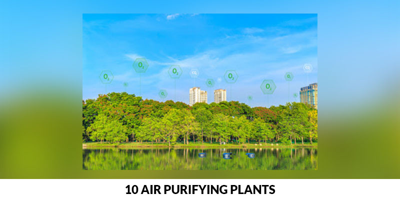 10 Air Purifying Plants