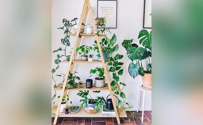 Make a Plant Corner