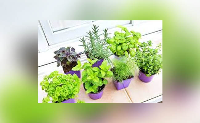 Pick Ideal Location For Small Vegetable Garden