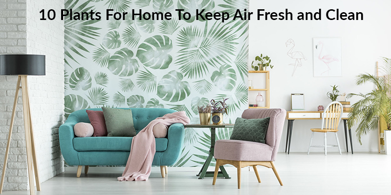 Plants for Home To Keep Air Fresh and Clean
