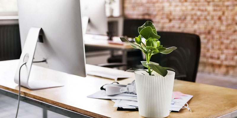 Plants for Office Desk with No Windows