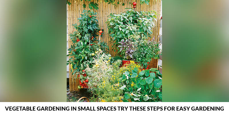 Steps For Easy Gardening