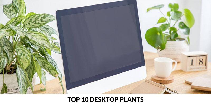 Top 10 Desktop Plants