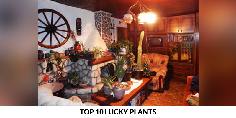 Top 10 Lucky Plants