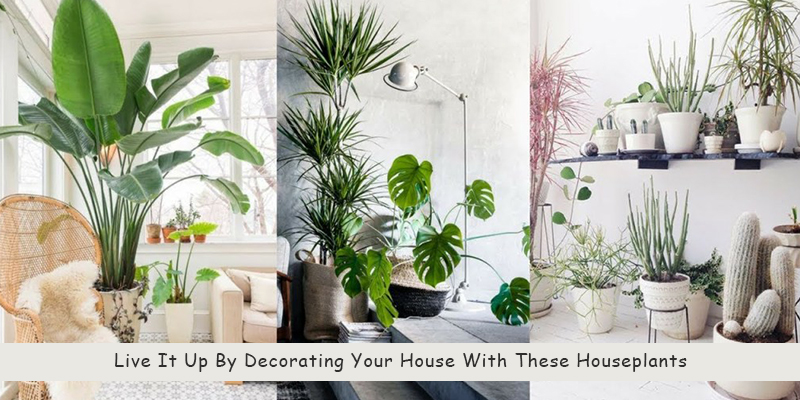 Best Home Decor Plants